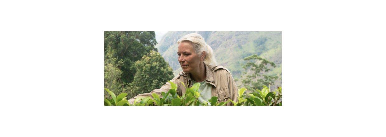 Ceylon Te af høj kvalitet